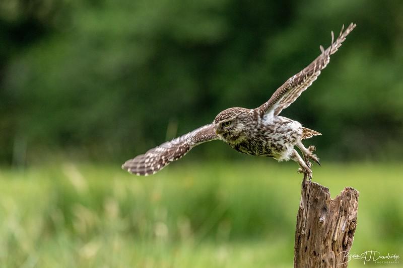 The Little Owl Shoot-6599.jpg