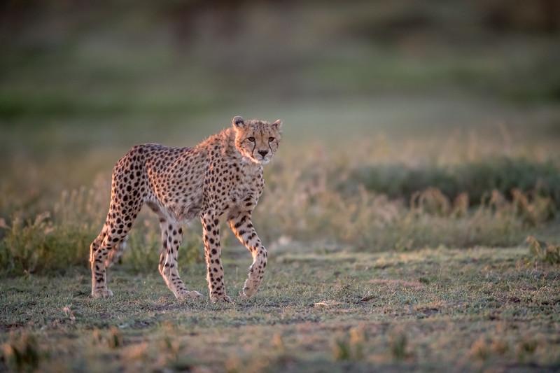 Tanzania_Feb_2018-123.jpg