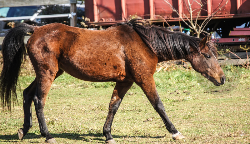 Saw Horse Barn