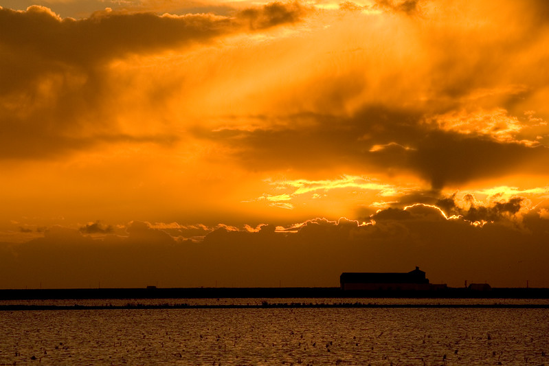Dramatic sunset on a harvested rice field, Doñana marshland area, Isla Mayor, Spain