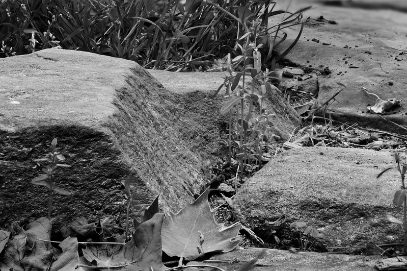 Stones and Grass - bw.jpg