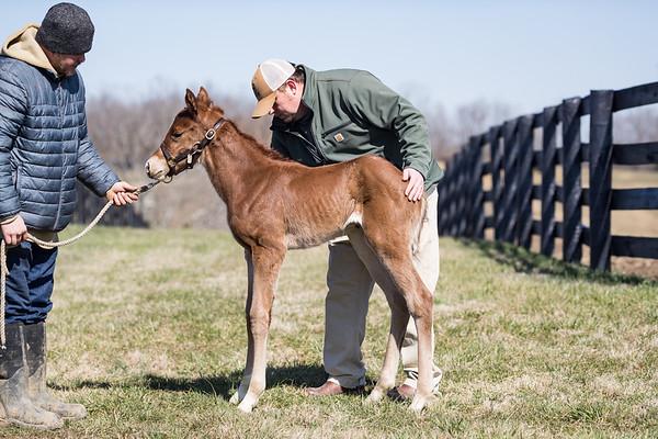 Spring Foals '20