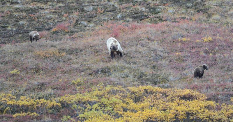 Alaska Fall 2013 - 204.jpg