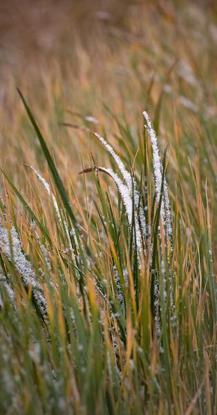 Grass Detail - Gros Ventre Road