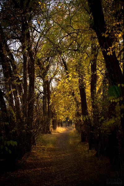 Potter Forest