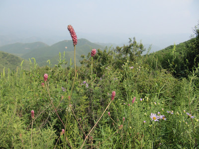 General Xu great wall hiking【summer Jul 】