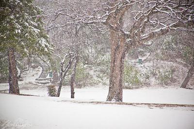 100211 Snow in Dallas