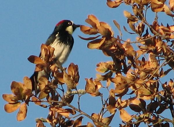 Murrieta, CA - Santa Rosa Plateau Reserve