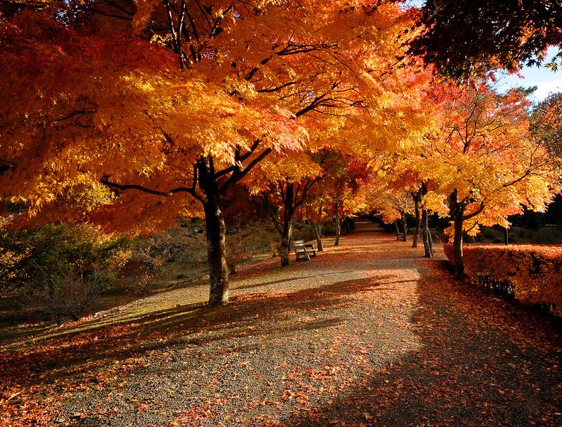 20121114_210_Upload.jpg