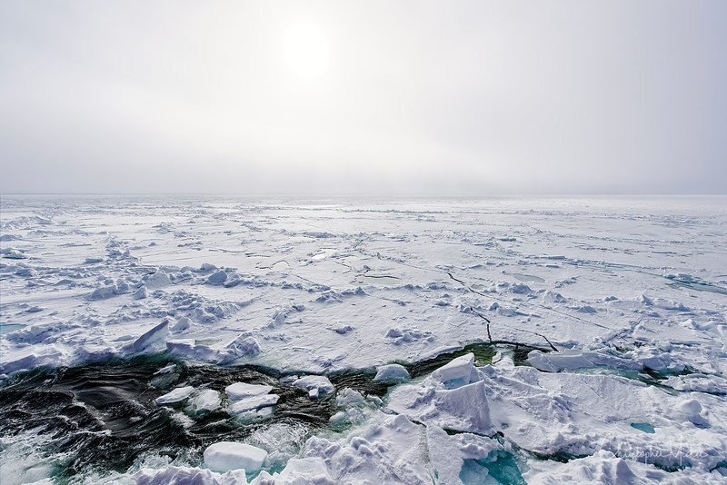 150630_Polar Bear adt Ship_9439.jpg