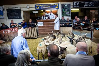 Bentham Shearling Sale 2018
