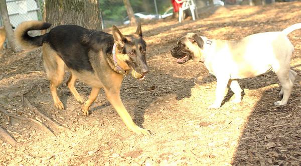 PICS JUNE 20::FAITH & SOPHIE (mastiff pup)