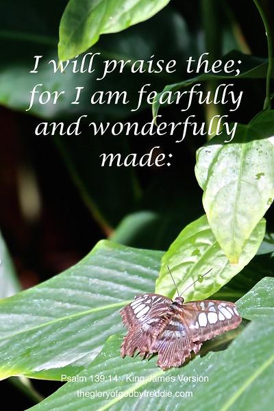 Psalm 139-14 d .JPG