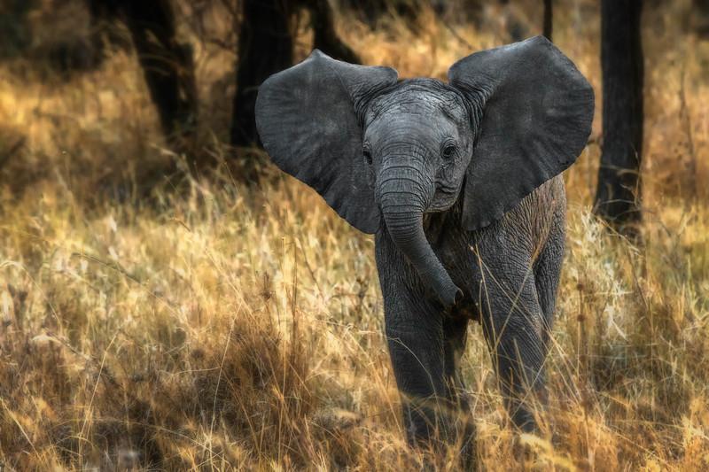 Tanzania-safari-14.jpg