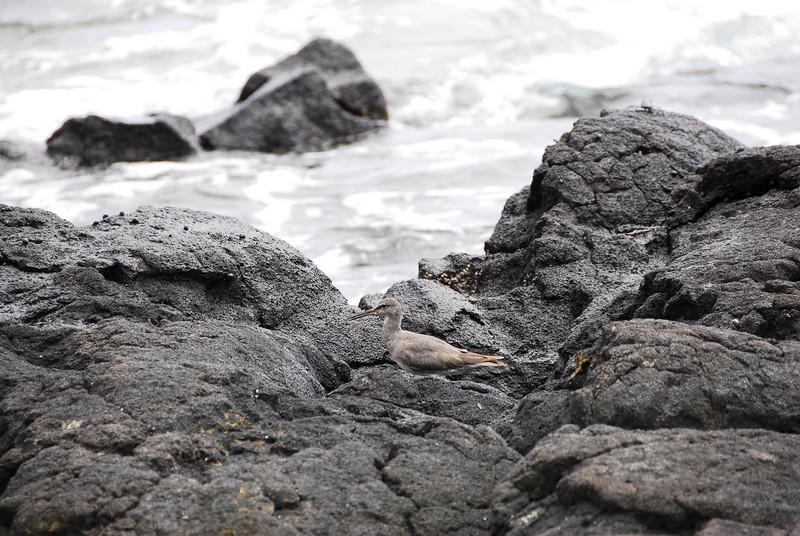 Rocky beach at Puʻukoholā Heiau National Historic Site, Hawaii