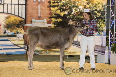 Supreme Brown Swiss Show 2017