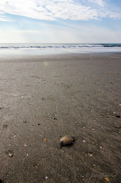 USA-SC-Myrtle Beach-4231.jpg