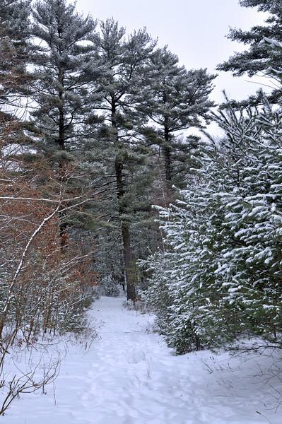 Snow around town 003.jpg
