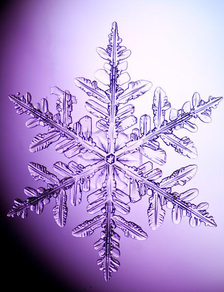 snowflake-3030-Edit.jpg