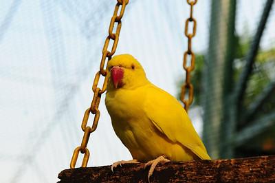 2013 KL Bird Park