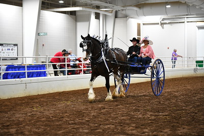 19 Mens clydesdale cart