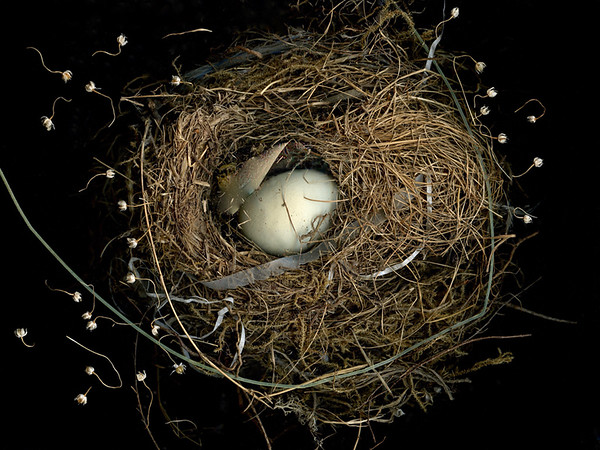 Nesting in the Universe