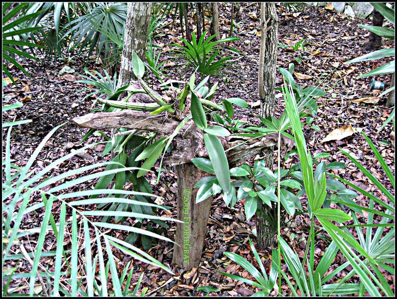 Symbionese Liberation Garden  ©2009 FlorieGray