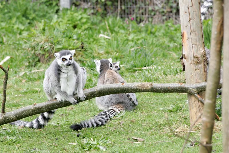 Newquay Zoo 032.jpg