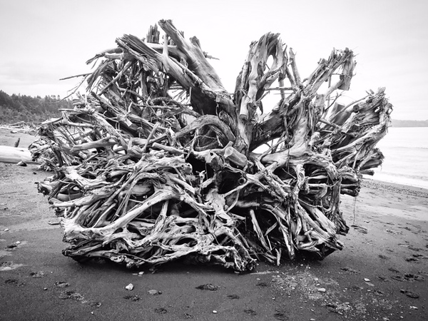 RobCaseyPhoto-tree-roots-beach.jpg