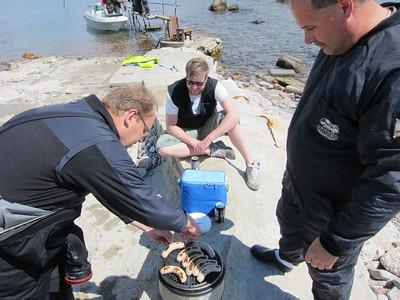 20110625 Dive, Pølshuk