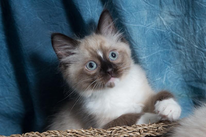 Walt kittens-23.jpg