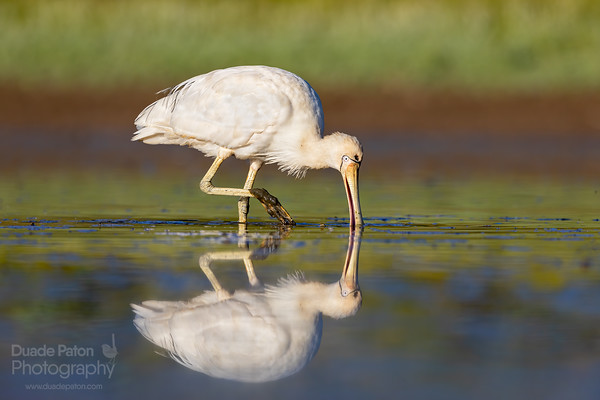 Bird Photography Gear Review - Skimmer Ground Pod