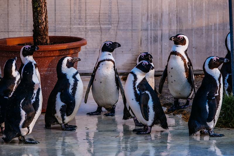 Tonis Zoo-0515.jpg