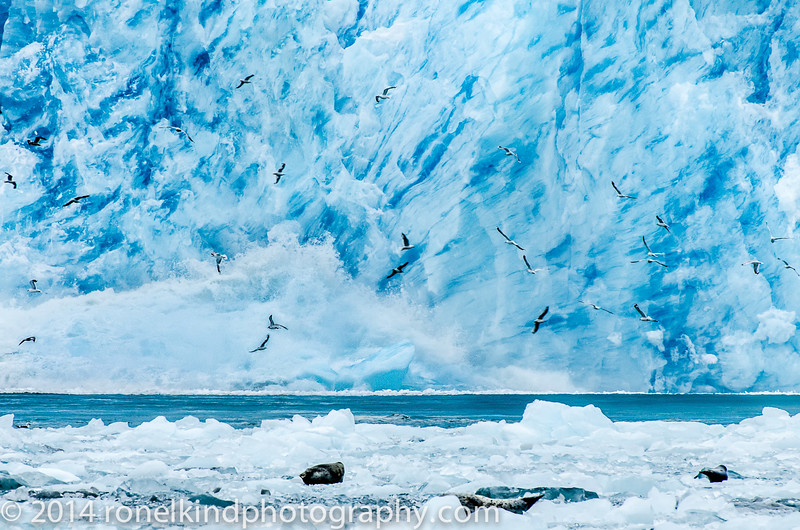 As LeConte Glacier's bay echoed the explosion, the crashing iceberg created a massive wave...