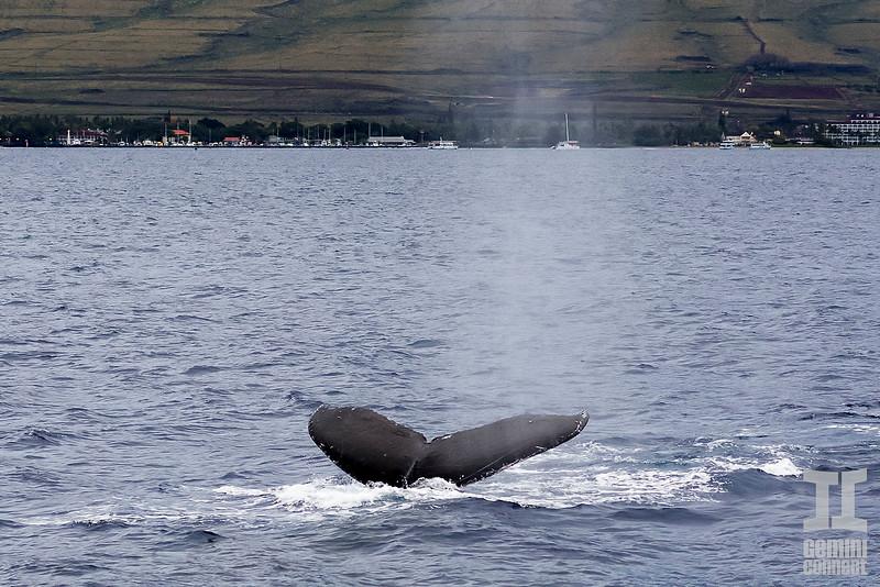 Whale 04.jpg
