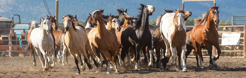 2019 Rodeo 4 (40 of 59).jpg