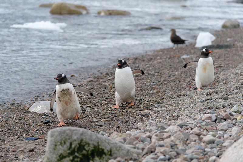Antarctica-0785.jpg