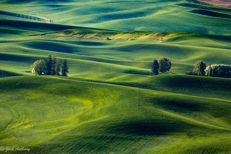 The wheatfields in the Palouse Region of Washington State