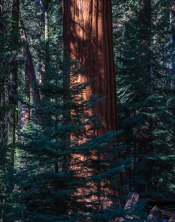 Sequoia & KIngs Cny NP