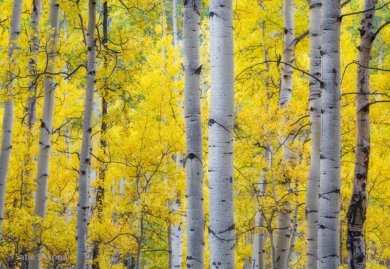 ColoradoAspensFall03_1k.jpg