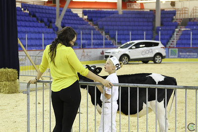 Trois Rivieres Holstein Show 2017