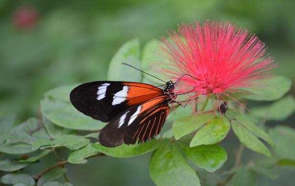 Key West Butterfly Conservatory/Key West/FL - NOV., 2011