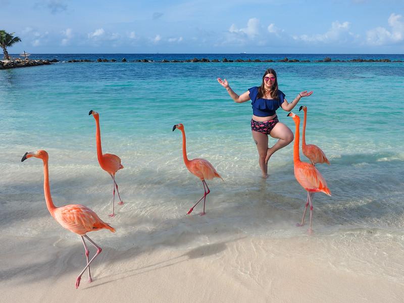 Flamingos on Renaissance Private Island in Aruba