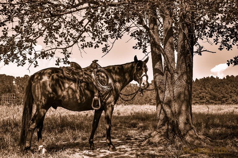 western 22.jpg