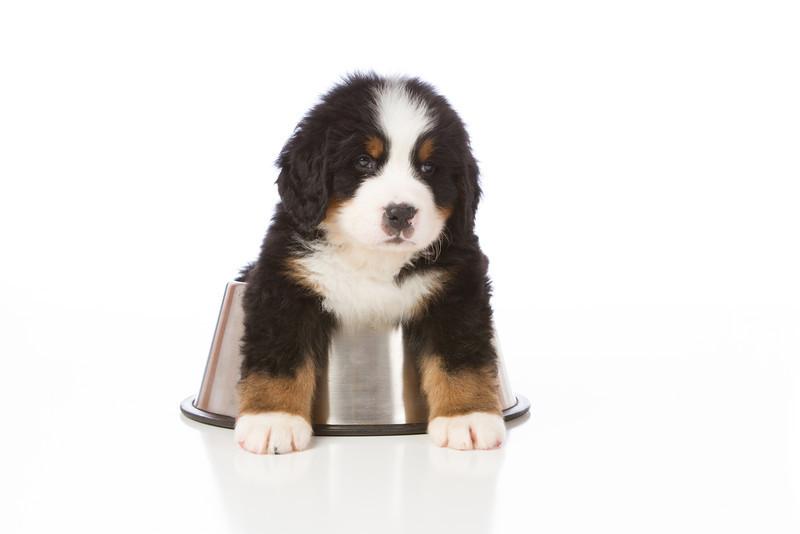 2013-Pearson Pups-Jun02-0364.jpg