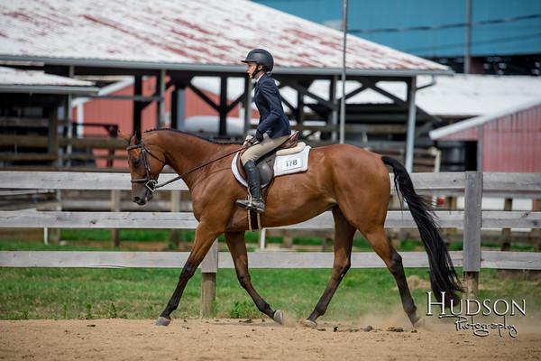 65 Breed Type HUS Horses Jr