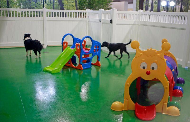 Doggy Daycare 1 .jpg