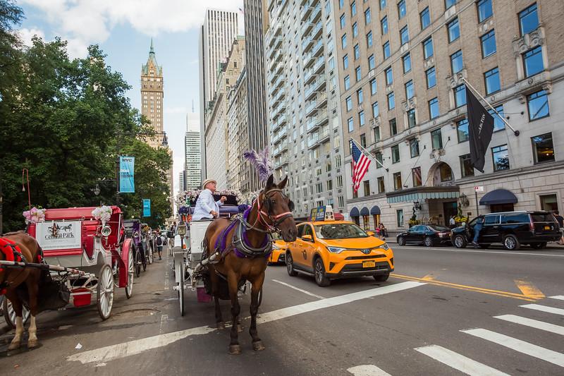 Central Park Wedding - Beth & Nancy-161.jpg