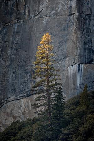 Yosemite and the Sierra
