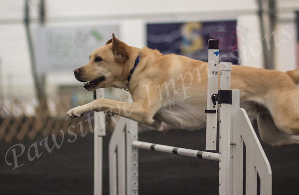 AKC Agility Trial Sat Novice Groups Columbia, MO 4-27-2013